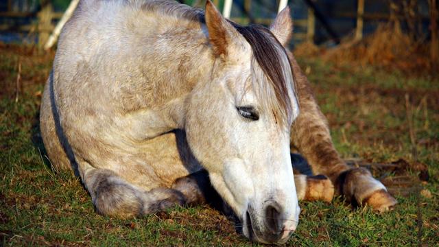 Kisah Kuda Yang Lelah