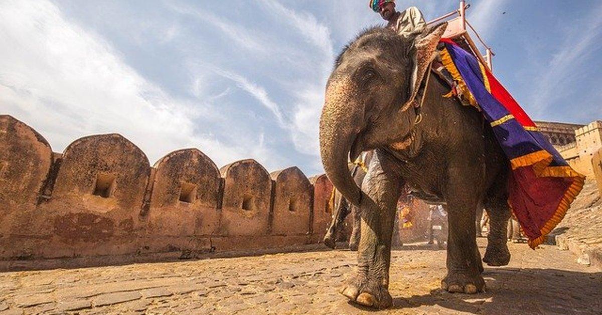 Kisah Menepati Nadzar, Al-Qalanisi Selamat Dari Amukan Gajah