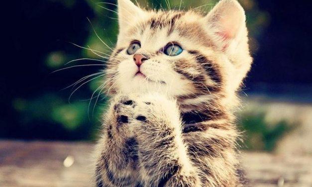 Tersebab Seekor Kucing, Wanita Ini Diancam Siksa di Dalam Neraka