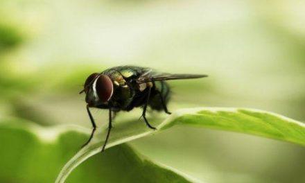 Dua Orang Masuk Neraka dan Surga karena Lalat