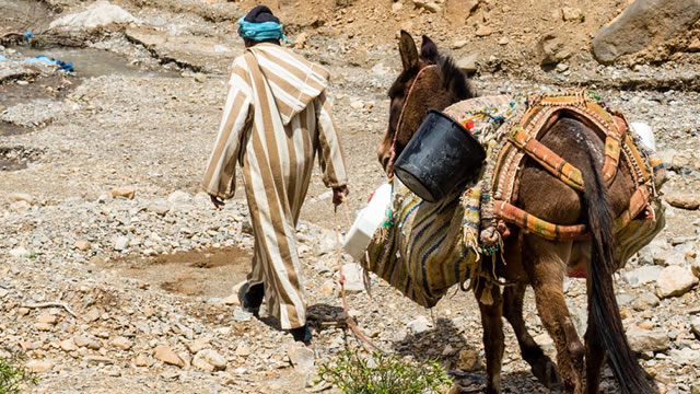 Kisah Sanad bin Ali, Menjual Hewan Tunggangan Ayahnya Untuk Membeli Kitab