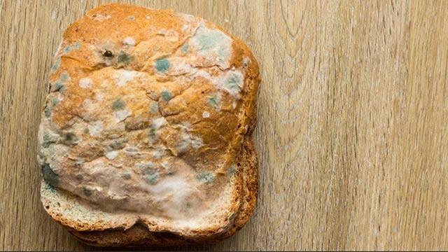 Kisah Sepotong Roti Basi