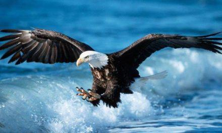 Kisah Syibl al-Madari, Ikhlas Dagingnya Dicuri Burung Rajawali